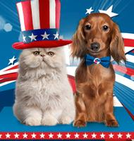 Up to 50% Off + 15% Off $49PetFoodDirect Memorial Day Sale