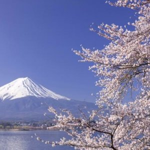 From $19998-Day Japan Cherry Blossom Spring Tour Package