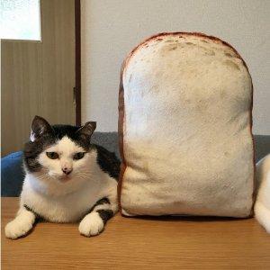 $20.6 / RMB130 直邮中美铲屎官必入 山型切片面包 靠垫 热卖