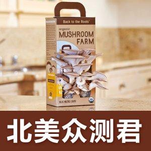 好吃又好玩神奇蘑菇盒,火锅食材自己种