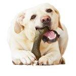 限今天:Nylabone 狗狗玩具、磨牙棒